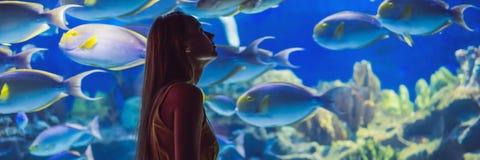 Tocchi della giovane donna un pesce di stingray in un'INSEGNA del tunnel di oceanarium, FORMATO LUNGO fotografia stock