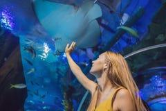 Tocchi della giovane donna un pesce di stingray in un tunnel di oceanarium fotografia stock