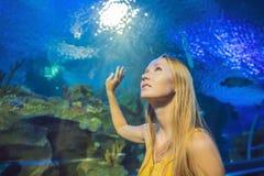 Tocchi della giovane donna un pesce di stingray in un tunnel di oceanarium immagine stock libera da diritti