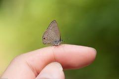 Tocchi la natura con la farfalla Immagini Stock Libere da Diritti