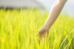 Tocco della donna della mano nel giacimento di grano Immagini Stock Libere da Diritti