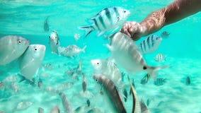 tocco della mano un mare del pesce in rosso Fotografie Stock Libere da Diritti