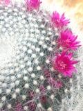 Tocco di colore rosa Immagini Stock Libere da Diritti