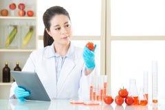 Tocco femminile asiatico dello scienziato la compressa digitale che guarda pomodoro Immagini Stock Libere da Diritti