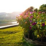 Tocco magenta del fiore la luce solare Immagine Stock