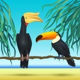 Toco toucan και rhinoceroc, λογαριασμός, ρεαλιστικά πουλιά που κάθεται στο τροπικό υπόβαθρο κλάδων με τη θάλασσα παραλιών Στοκ εικόνες με δικαίωμα ελεύθερης χρήσης