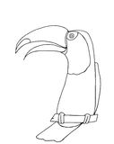 Toco Toucan. Black and white hand-drawn toucan Royalty Free Stock Photo