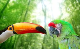 Toco toucan and Military Macaw Green parrot. In jungle in love birds royalty free stock photography