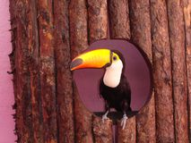 Toco Toucan - Ramphastos toco Stock Photo