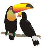 Toco toucans στοκ φωτογραφία με δικαίωμα ελεύθερης χρήσης