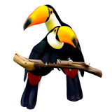 Toco toucans sitting on the branch Royalty Free Stock Photo