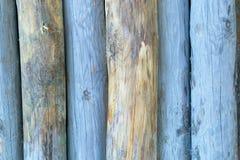Tocones de árbol coloreados azul Imagen de archivo libre de regalías