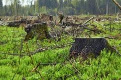 Tocones de árbol en el plase del deforestration Fotos de archivo libres de regalías