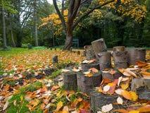 Tocones de árbol en la estación de Autumn Fall imagen de archivo libre de regalías