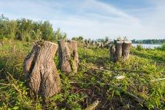 Tocones de árbol en los bancos de un río Fotos de archivo libres de regalías