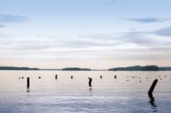 Tocones de árbol en un lago tranquilo Foto de archivo