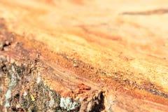 Tocones de árbol macros del fondo Foto de archivo libre de regalías