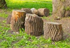 Tocones de árbol, tala de árboles Imágenes de archivo libres de regalías