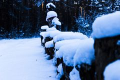 Tocones de madera del pino debajo de la nieve foto de archivo libre de regalías