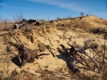 Tocones e hierba muertos en la colina de la arena Imágenes de archivo libres de regalías