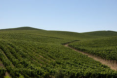 toczni winnice zdjęcie stock