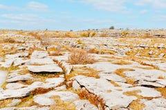 Toczni wzgórza Burren Zdjęcia Stock