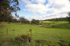Toczni wzgórza i bydło pasa Południowych średniogórza Australia obraz stock
