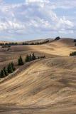 Toczni wzgórza i drzewa obrazy royalty free