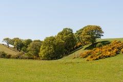 Toczni wzgórza w wiośnie Zdjęcie Stock