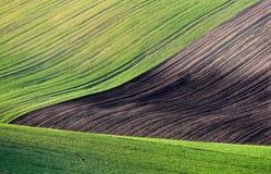 Toczni zieleni pola i pastwiskowy młody rogacz Południowy Moravia republika czech Fotografia Stock