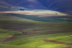 Toczni zieleni rolniczy pola z górami w tle Południowa Afryka - Caledon, Zachodni przylądek - zdjęcia stock