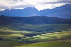 Toczni zieleni rolniczy pola z górami w tle Południowa Afryka - Caledon, Zachodni przylądek - obraz stock