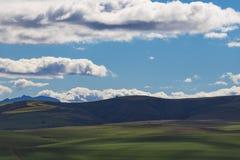 Toczni zieleni rolniczy pola z górami w tle Południowa Afryka - Caledon, Zachodni przylądek - zdjęcie royalty free