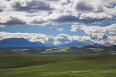 Toczni zieleni rolniczy pola z górami w tle Południowa Afryka - Caledon, Zachodni przylądek - obraz royalty free