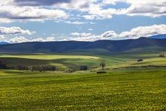 Toczni zieleni rolniczy pola z wiatraczkiem i górami w tle Południowa Afryka - Caledon, Zachodni przylądek - fotografia royalty free