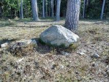 Toczny kamień w lesie obrazy stock