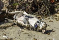 Toczny pies zdjęcia stock