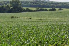 Toczny pole Młody kukurydzany pole w Omaha Nebraska gdzieś fotografia stock