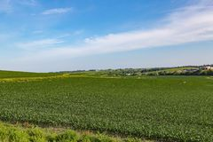 Toczny pole Młody kukurydzany pole w Omaha Nebraska gdzieś zdjęcia royalty free