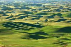 Toczny wzgórze krajobraz w Palouse Obrazy Royalty Free
