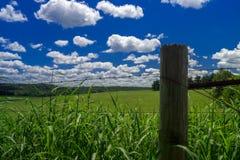 Toczny zieleni pole z białymi cumulus chmurami Obrazy Royalty Free