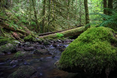 Tod Creek. In Gowland Tod Provincial Park, Victoria, British Columbia Canada Stock Image