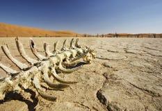 Tod in der Wüste Stockfotografie
