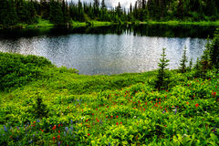 Tod Lake surrounded by wildflower filled alpine meadows near the top of Tod Mountain in the Shuswap Highlands Royalty Free Stock Photography