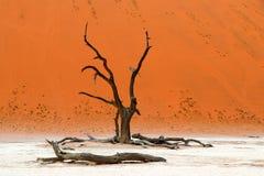 Tod Vlei - Sossusvlei - Namibia Afrika stockfotos
