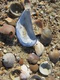 Toda la clase de cáscaras en la playa fotografía de archivo