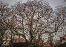 Toda la luz que busca de abarcamiento del árbol Foto de archivo libre de regalías