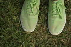 Toda verde Foto de Stock Royalty Free