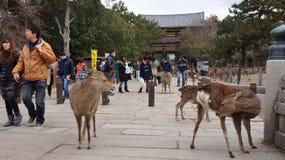 Todaiji in Nara Stockfoto