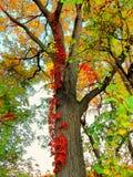Todas as cores da queda estão apenas Imagem de Stock Royalty Free
